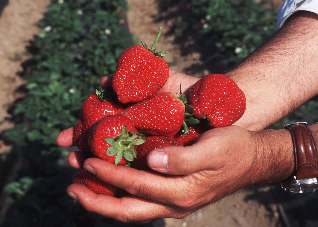berries-713077_1280